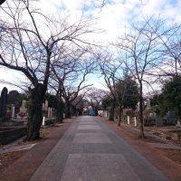 東京都 青山霊園で墓地の測量